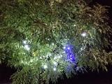 20141214_Illuminations.JPG